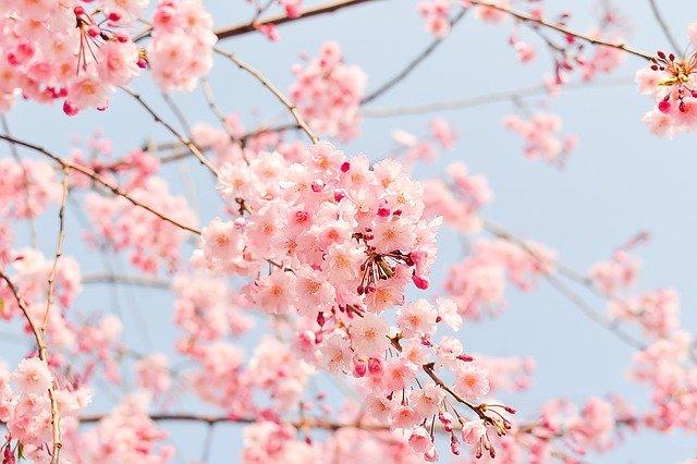 春は便秘になりやすい季節